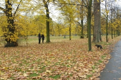 Dog training Belgravia